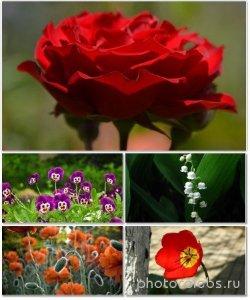 Цветы в сборнике обоев для рабочего стола 31