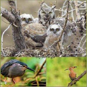 Изящные птицы в прекрасной природе.