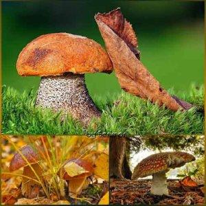 Всяческие фото интересных грибов