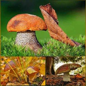 Различные фото прекрасных грибов
